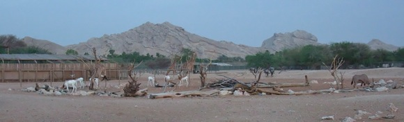 Al-Ain-Wildlife-Resort-9