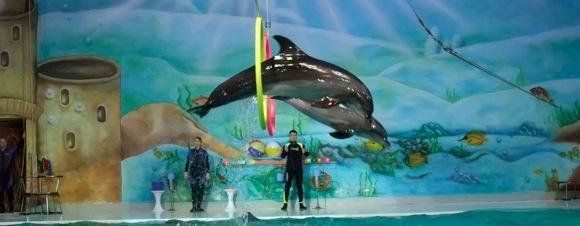Dolphinarium-Dubai-10