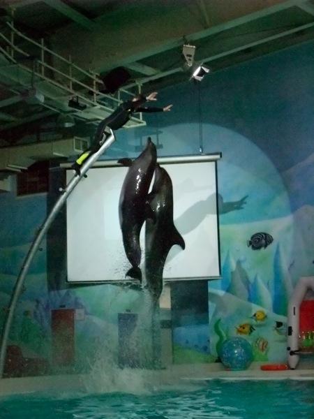 Dolphinarium-Dubai-11
