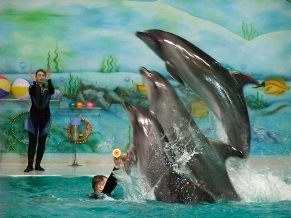Dolphinarium-Dubai-13
