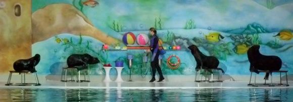 Dolphinarium-Dubai-4