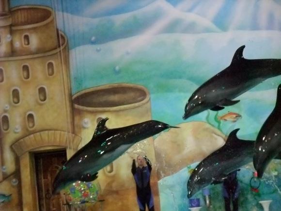 Dolphinarium-Dubai-6