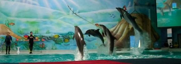 Dolphinarium-Dubai-7