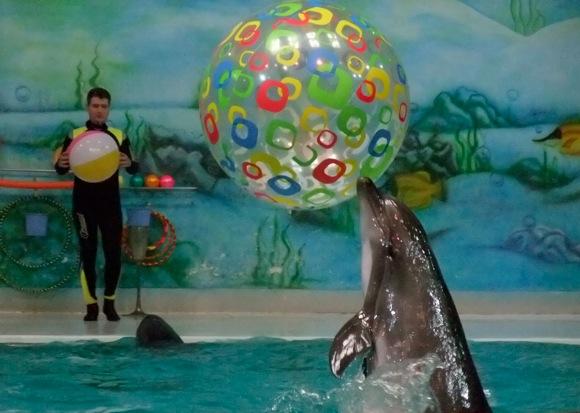 Dolphinarium-Dubai-9