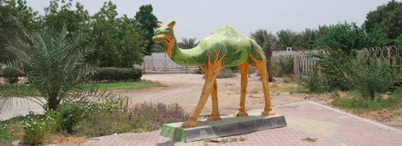 Zayed-Library-camel