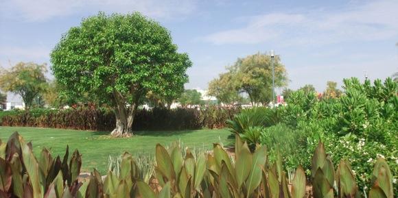 Jahli-Park-Al-Ain-7