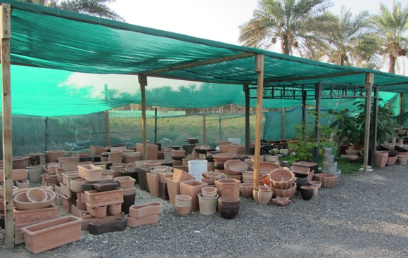 Al-Ain-plants-nursery 2