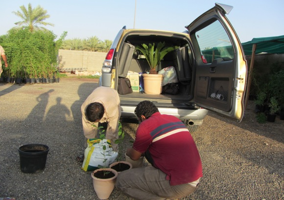 Buying indoor and outdoor plants in Al Ain – Al Ain Enthusiast