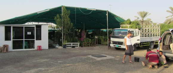 Al-Ain-plants-nursery